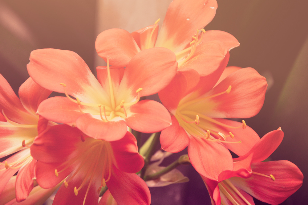 Pretty flowers increase your happiness.