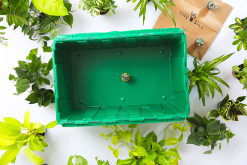 A MakeSpace storage bin with a tiny succulent plant from The Sill inside.