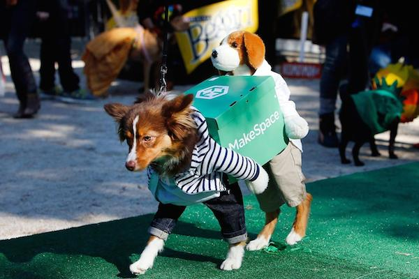 A brown and white dog is wearing a MakeSpace Puploader Halloween costume.