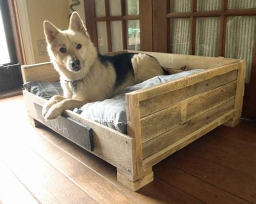 This DIY wood pallet bed is storing a white and black dog.