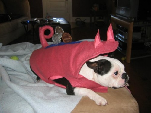 A piggy bank dog homemade Halloween costume that has storage for your coins.