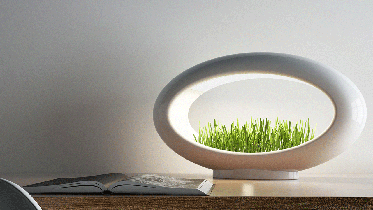 A white Grasslamp, which is a grass planter and an ambient LED lamp, is on top of a desk in a small apartment.
