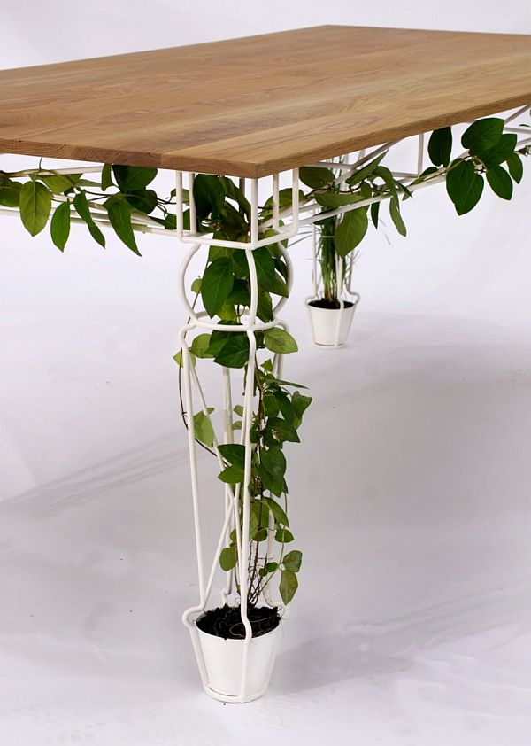 Plantable table/planter helps vines grow in a small apartment.