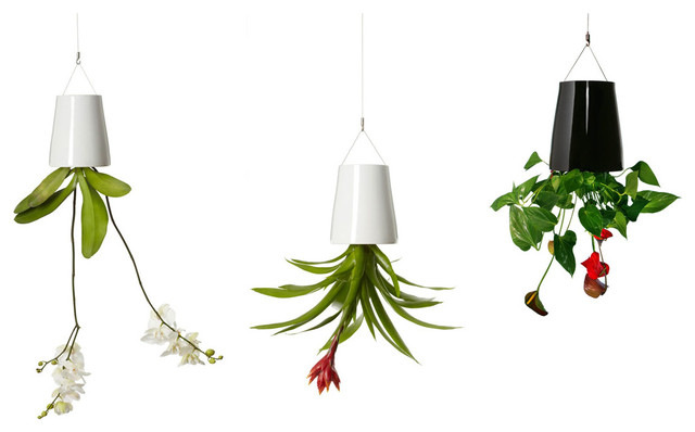 Mini sky indoor planter hangs houseplants from the ceiling in a tiny apartment.