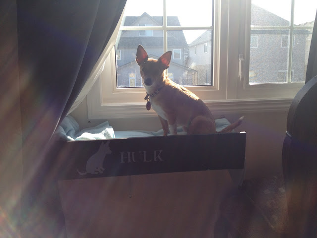 A window shelf for a dog made of Fabian shelves is a creative IKEA hack.