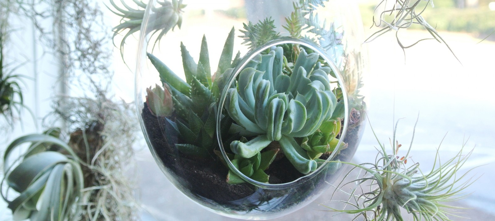 A hanging planter storing a succulent in front of a window.
