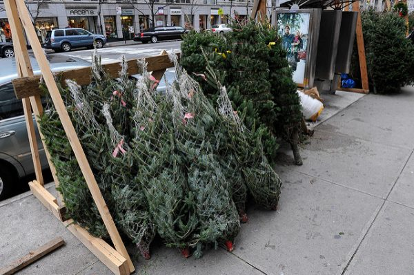 christmas trees for sale in nyc