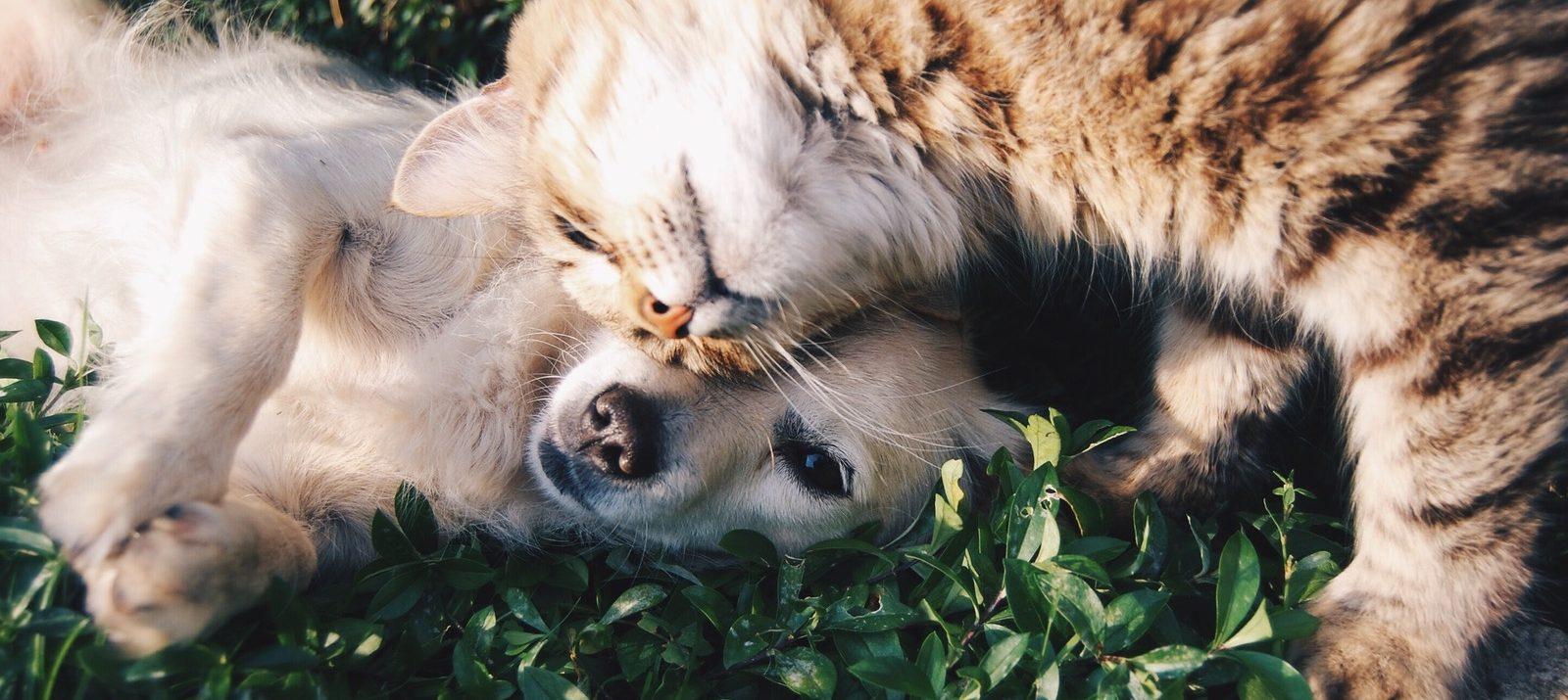 how to move with dogs, cats, and pets