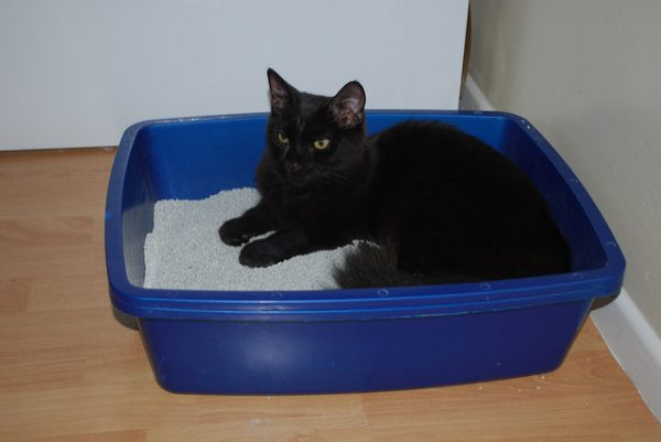 black cat in a blue litter box