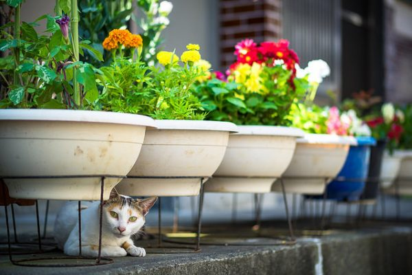 white and brown cat sitting underneath raised potted plants