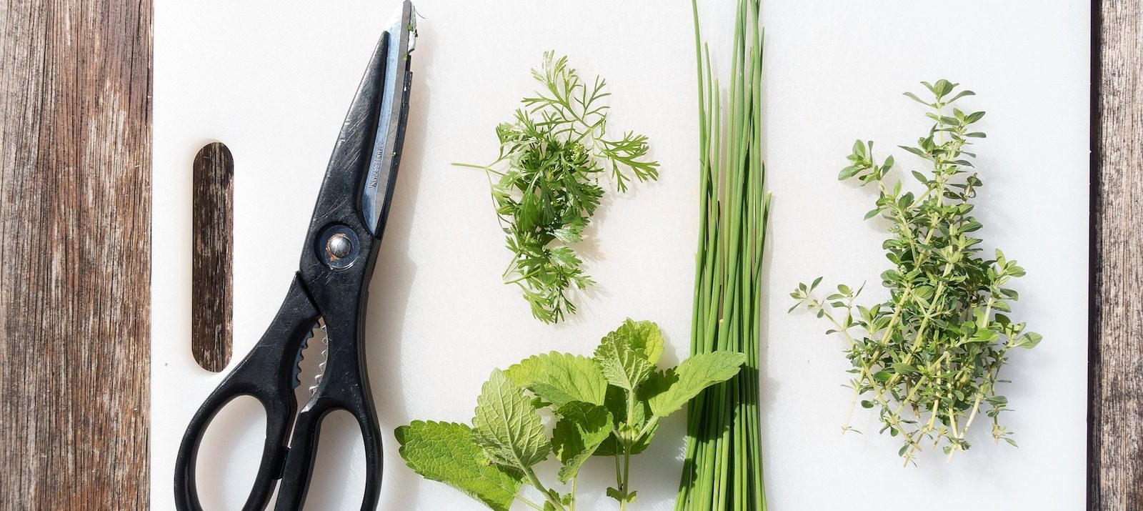 herbs that can be grown at home