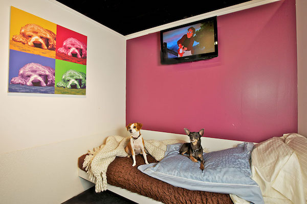 2 dogs relaxing in their posh doggy hotel room