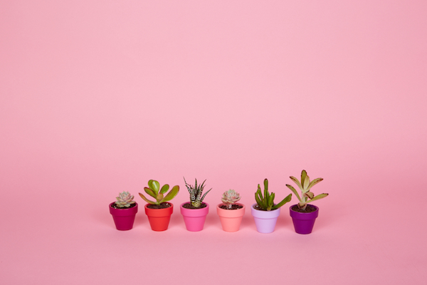 six mini succulents lined up in a row
