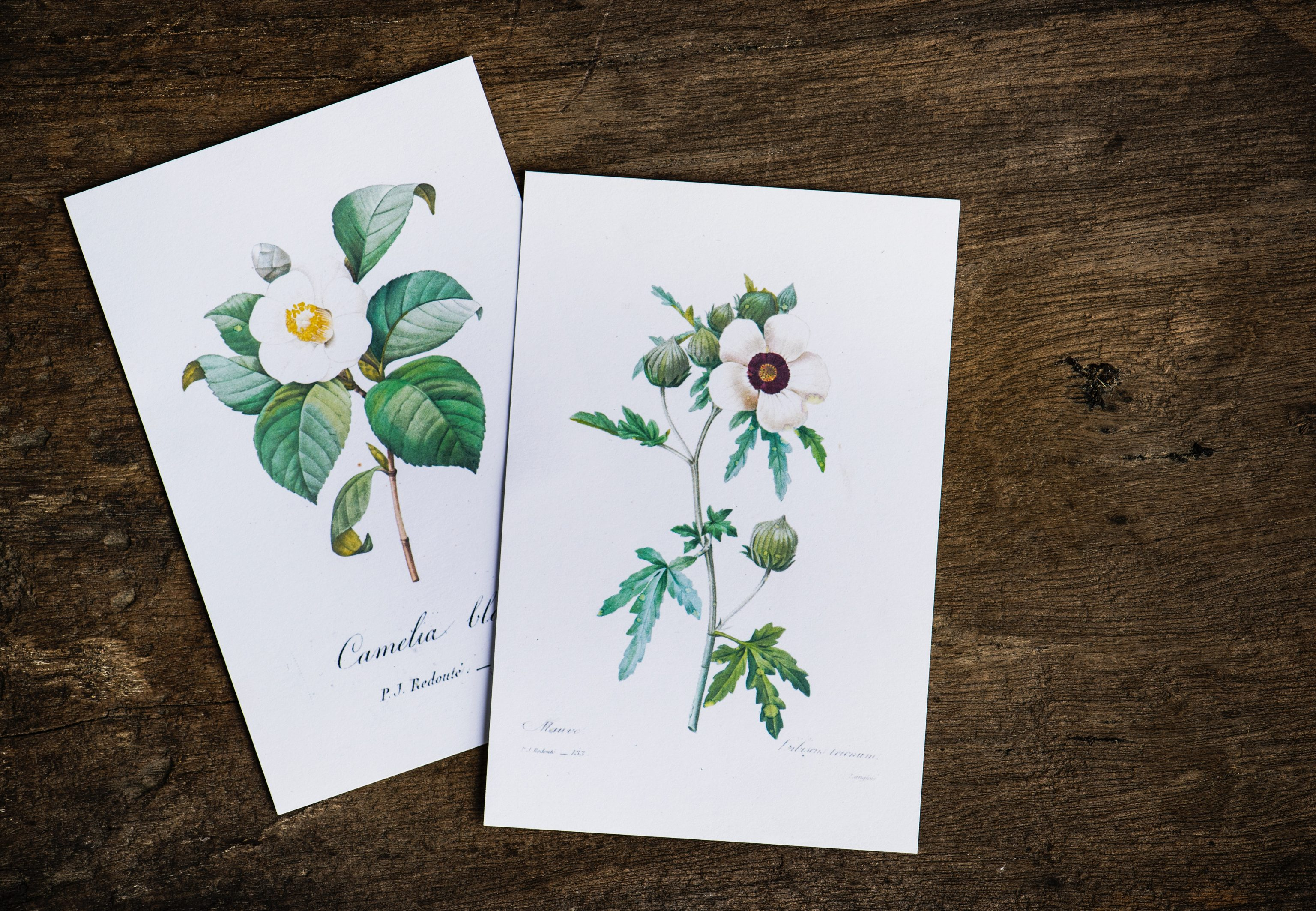 two botanical prints lying side by side