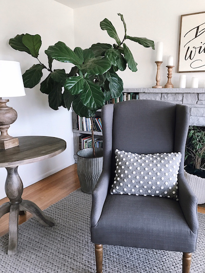 fiddle leaf fig home interior