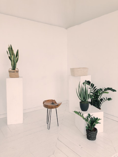 plants and succulents against a white backdrop