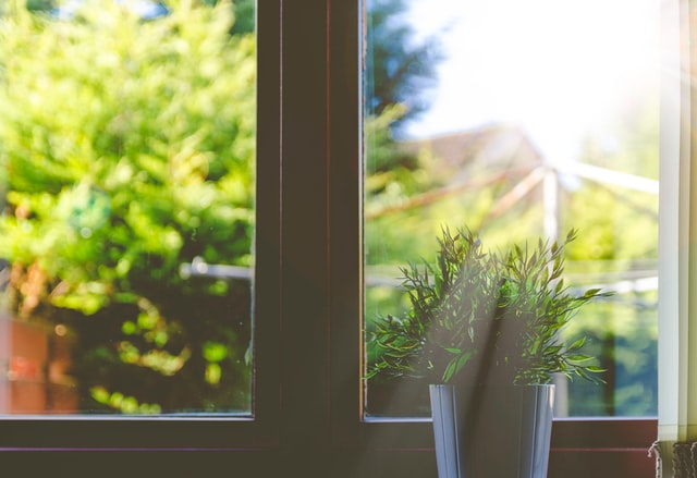 A potted plant by the window against bright sunlight
