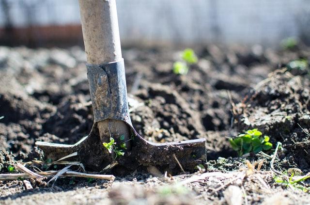 A gardening tool in soil