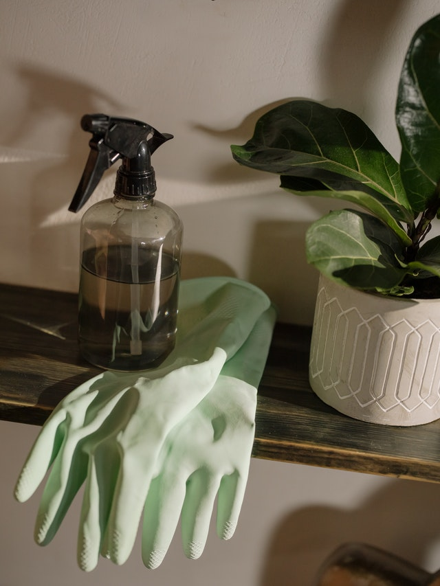 a pair of green rubber gloves on a clear spray bottle placed next to a houseplant