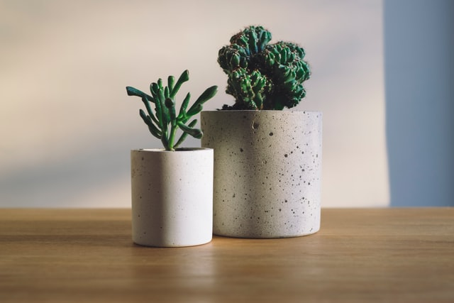 Two concrete flower vases with cacti